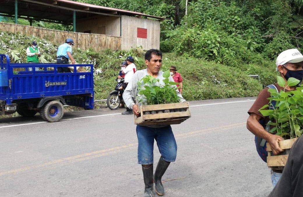 ENTREGA PLANTONES PARA CONTINUAR CON LA REFORESTACIÓN EN LOS CORREDORES DE HUALLAGA, VALDIZAN, LUYANDO.