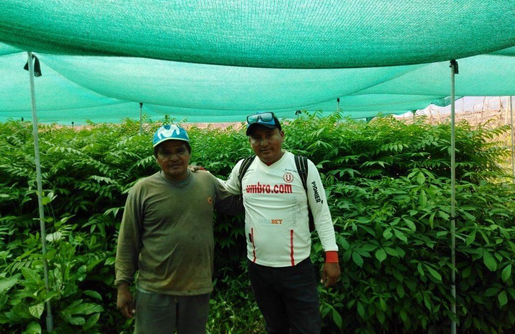 Instalación de sistemas agroforestales en Santa Flor, Nueva Control y Contralmirante Grau, Bajo Biabo, Bellavista-San Martín