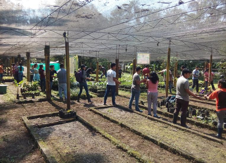 Acondicionamiento para instalar Vivero Forestal de la Universidad Nacional Agraria de la Selva-UNAS y generar 15,000 plantones para  la agroforestería.
